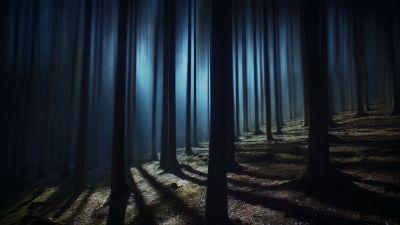 Dark Forest, Woods, Night time, Dark, Shadow, Tall Trees, Haunted, Mystery, 5K