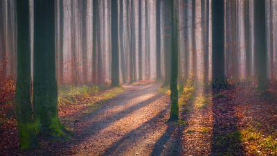 Autumn Forest, Fallen Leaves, Fog, Sun light, Shadow, Trees, Woods, 5K