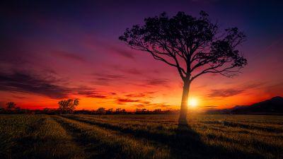 Sunset, Orange sky, Landscape, Purple, Clouds, Tree, Silhouette, 5K