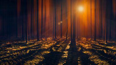 Sun rays, Woods, Tall Trees, Shadow, Dark Forest, Sunbeam, Orange, 5K