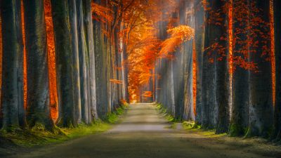 Forest path, Trunks, Trees, Woods, Autumn leaves, Road, Sun rays, 5K