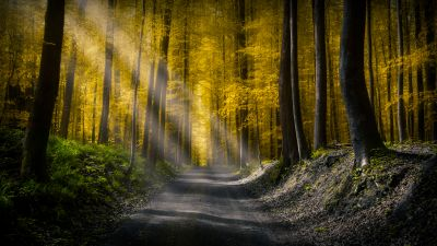 Sun rays, Dirt Road, Autumn forest, Foliage, Pathway, Woods, Trees, Calm, Peaceful, 5K