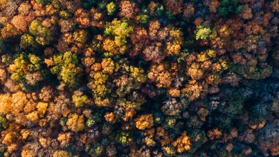 Forest, Autumn trees, Aerial view, Top View, Texture