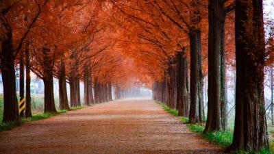 Autumn, Trees, Path, Foggy, Mist, Morning, Fall, 5K