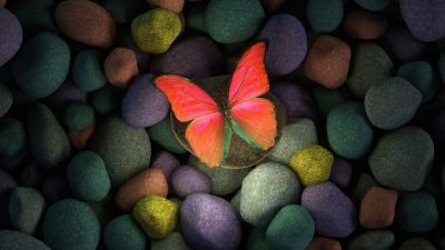 Butterfly, Stones, Colorful, Focus, Pebbles, Aesthetic, Glowing, Girly backgrounds