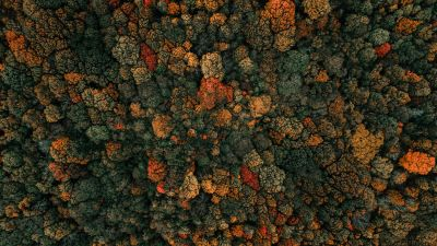 Autumn trees, Forest, Aerial view, Birds eye view, Green Trees, 5K