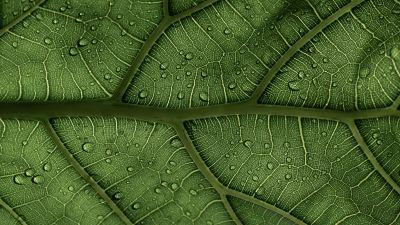 Green leaf, Veins, Pattern, Water drops, Macro, Closeup, 5K