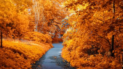 Maple trees, Fall, Autumn, Path, Woods, Fall Foliage, Yellow, Aesthetic