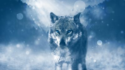 Wolf, Predator, Wild animal, Winter, Snowfall, Fog, Cold, Starring