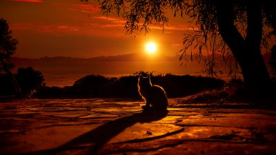 Cat, Silhouette, Sunset, Orange sky, Tree Branches, Shadow