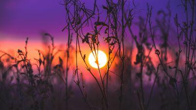 Sunrise, Silhouette, Purple sky, Plants, Dusk, Blurred, 5K