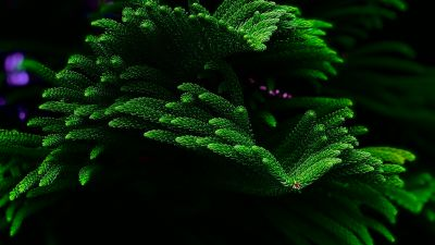 Green Plant, Closeup, Dark background, Selective Focus, Fresh, Beautiful