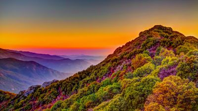 Sequoia National Park, California, United States, Green Trees, Colorful Sky, Purple, Daytime, Mountain range, Landscape, Countryside, Hill, Mountain Peak, Clear sky, 5K