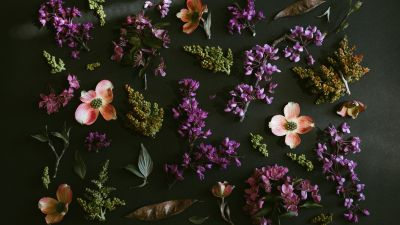 Purple Flowers, Dark background, Spring flowers, Green leaves, Foliage, 5K