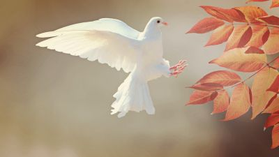 White Dove, Orange leaves, Flying bird, Feathers, Wings, Plumage, Branch