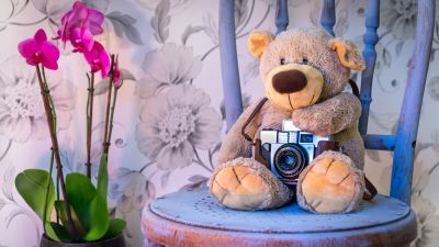 Teddy bear, Vintage Camera, Pink flowers, Orchid flowers, Cute toy, Wooden Chair, Green leaves, Toys, 5K