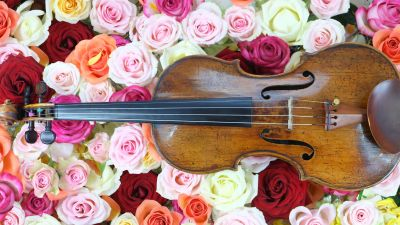 Rose flowers, Violin, Strings, Multi color, Colorful, Floral Background, Blossom, Beautiful, Musical instrument, 5K