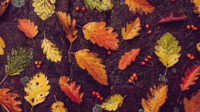Autumn leaves, Foliage, Fallen Leaves, Leaf Background, 5K