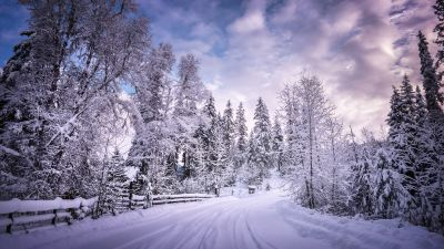Snowy Trees, Winter Road, Snow covered, Countryside, Woods, White, Landscape, Scenery