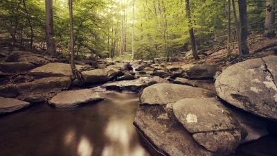 Inside Forest, Green Trees, Woods, Water Stream, Greenery, Rocks, Scenic, Landscape, Rocks, Long exposure