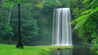 Millaa Millaa Falls, Australia, Waterfalls, Forest, Green Trees, Landscape, Cliff, Long exposure, Water Stream, Beautiful, Scenery