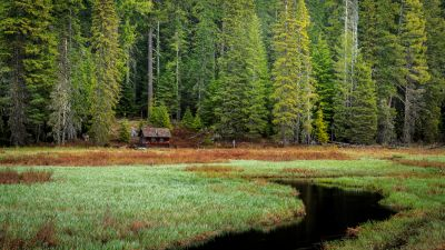 Timothy Lake, Oregon, Green Trees, Forest, Woods, Wooden House, Lakeside, Grass, Early Morning, Landscape, Scenery, 5K