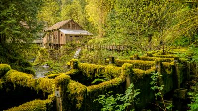 Cedar Creek Grist Mill, Woodland, Washington State, Forest, Landscape, Green Trees, Greenery, Moss, Scenery, 5K