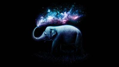 Elephant, Colorful, Surreal, AMOLED, Black background, 5K, 8K