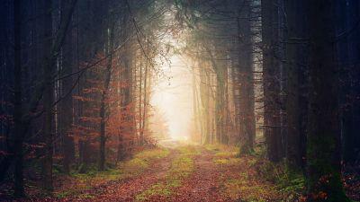 Forest, Autumn, Light, Path, Atmosphere, 5K