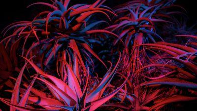 Aloe vera, Succulent, macOS Big Sur, Night, Plant, Stock, 5K