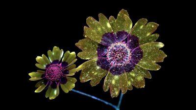 macOS Mojave, Flowers, Glitter, Girly, Black background, AMOLED, 5K