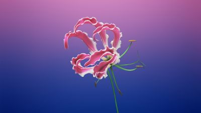 Floral, Gradient background, iOS 11, macOS Mojave, Stock, Girly, Aesthetic, 5K