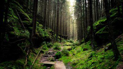 Saxon Switzerland National Park, Forest, Day light, Green, 5K