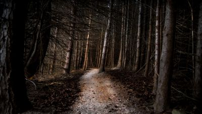 Thick forest, Woods, Pathway, Tall Trees, Landscape, 5K