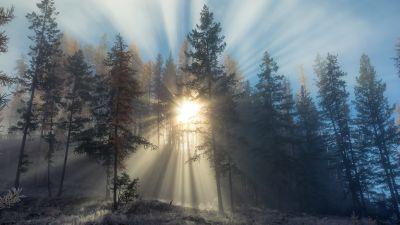 Foggy sunset, Forest, Sun rays, Landscape, Trees, Misty