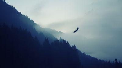 Eagle, Foggy, Mist, Mountain, Trees, Silhouette, Birds of Prey