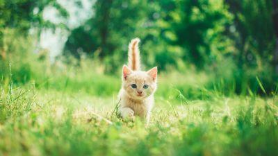 Kitten, Cute, Green Grass, Bokeh, Baby cat, Green background, Mammal, 5K