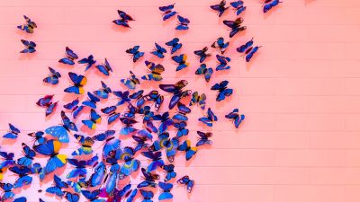Blue butterfly, Pink background, Wall, Decoration, Colorful, Beautiful, Aesthetic, 5K