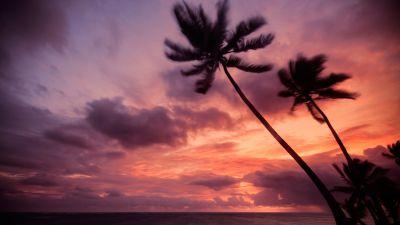 Punta Cana, Dominican Republic, Purple Sky, Cloudy Sky, Seascape, Silhouette, Sunrise, Horizon, Palm trees, Tropical