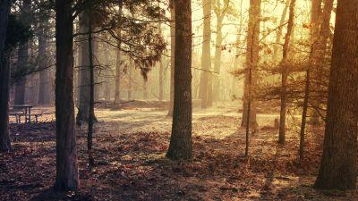Forest Trees, Sunrise, Woods, Fallen Leaves, Sun light, Early Morning