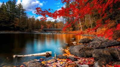 Autumn Forest, Maple trees, Lake, Wooden bridge, Autumn Leaves, Fallen Leaves, Long exposure, Reflection, Blue Sky, Landscape, Scenery