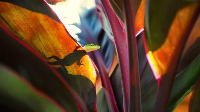 Green Lizard, Silhouette, Plant Leaves, Close up, Reptile, Peek, Selective Focus