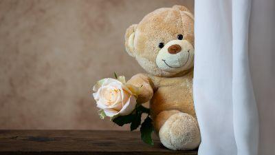 Teddy bear, Rose, Cute toy, Gift, Valentine's Day, 5K