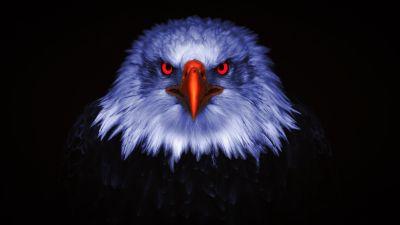 Eagle, Bird of prey, Raptors, Red eyes, Black background, 5K, 8K