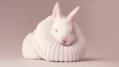 White rabbit, Newborn, Baby bunny, Sock, Cute bunny, Aesthetic