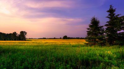 Farm Land, Green Fields, Purple sky, Landscape, Meadow, Pine trees
