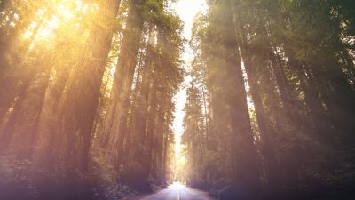 Redwoods National Park, California, Woods, Morning sun, Sun rays, Empty Road, Landscape, Scenery, 5K