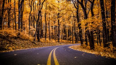 Shenandoah National Park, Virginia, United States, Autumn trees, Autumn Fall, Empty Road, Early Morning, Landscape, Scenery, Beautiful, 5K