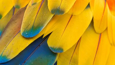 Macaw Feathers, Pattern, Multicolor, Colorful, Closeup, Macro, Water drops, Texture, Scarlet macaw