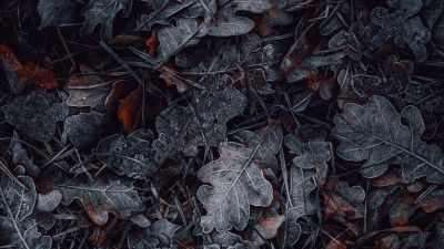 Leaves, Frozen, Dark, Winter, Night, Cold